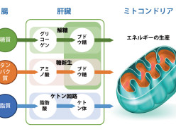 image_metabolism